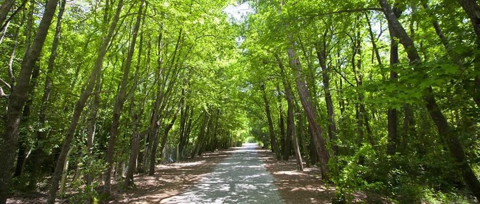 Günnücek Forest