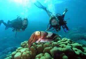 marmaris_diving_2